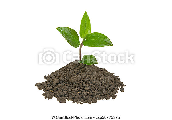 green sprout in a pile of soil on a white background - csp58775375