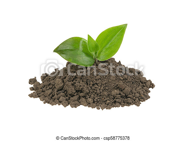 green sprout in a pile of soil on a white background - csp58775378