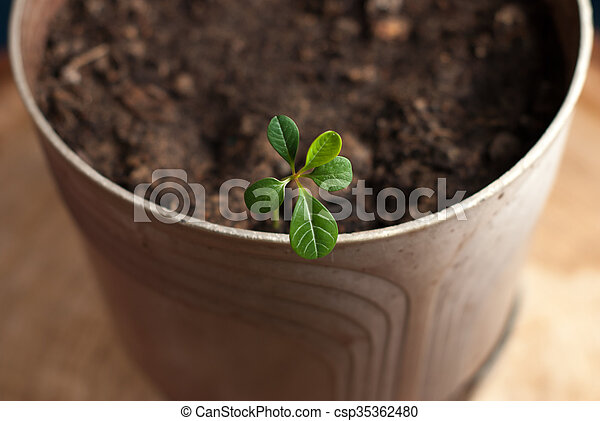 green sprout in a pot - csp35362480