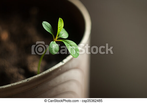 green sprout in a pot - csp35362485