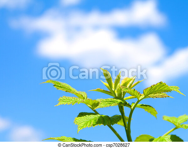 green sprout on blue sky - csp7028627