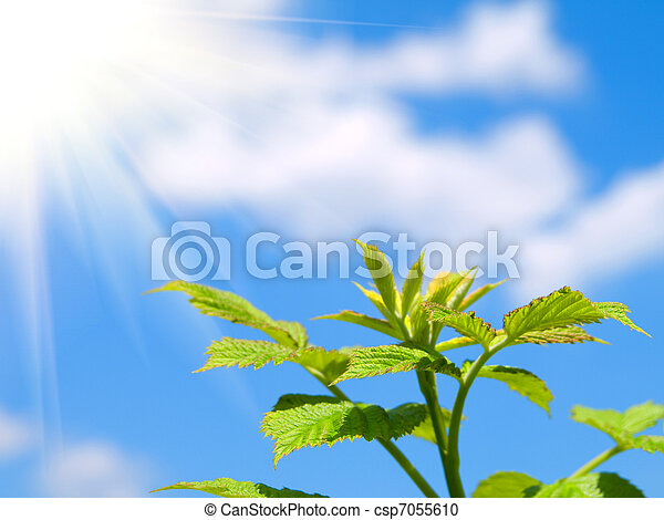green sprout on blue sky  - csp7055610