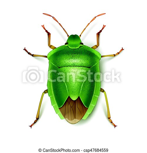 Vector green stink bug close up top view isolated on white background.