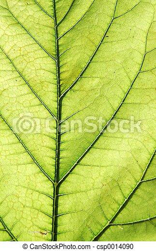 green - csp0014090