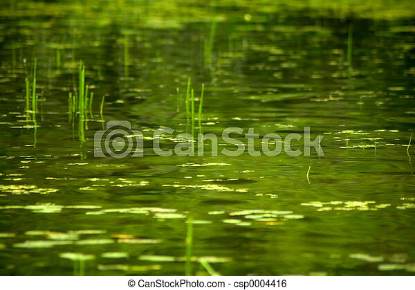 Green Swamp - csp0004416