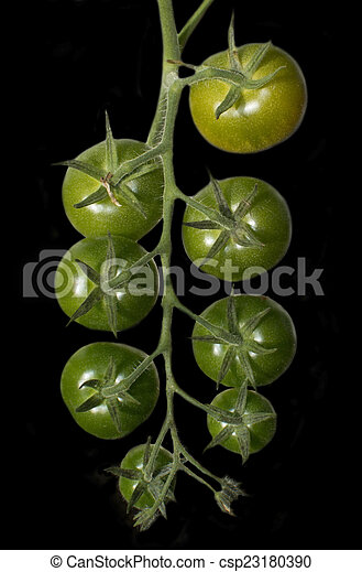 Green tomatoes - csp23180390