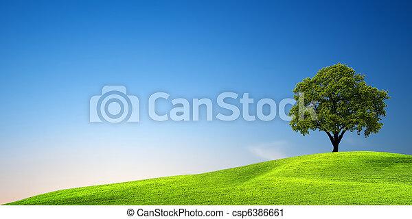 Green tree at sunset - csp6386661