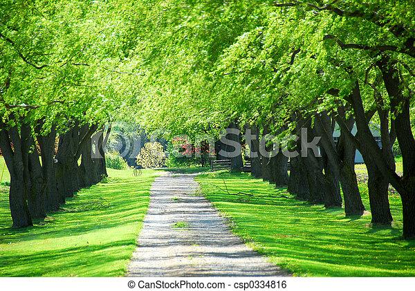 Green tree lane - csp0334816
