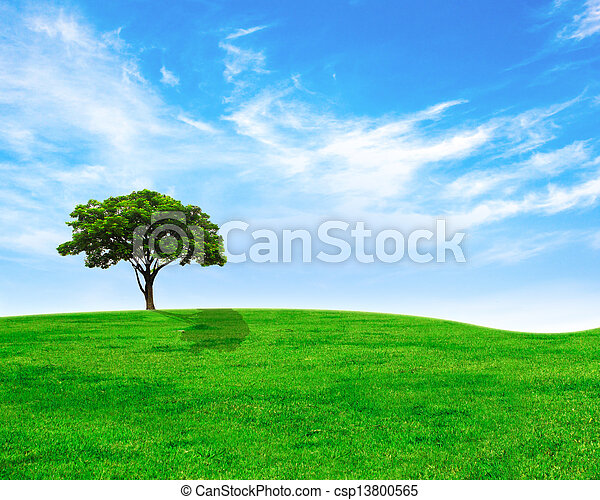 Green tree on green grass and cloudy sky - csp13800565