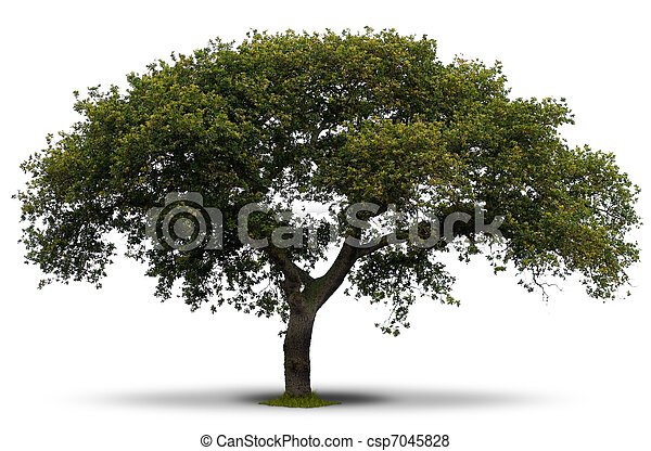 green tree over white background with grass at the root and shadow - csp7045828