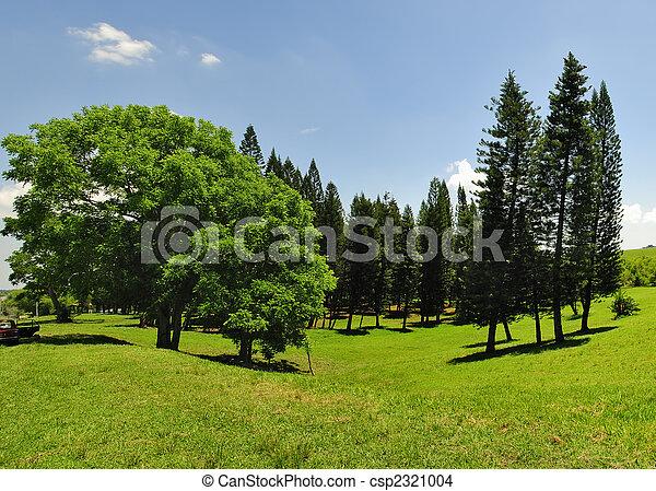 Green trees panorama - csp2321004