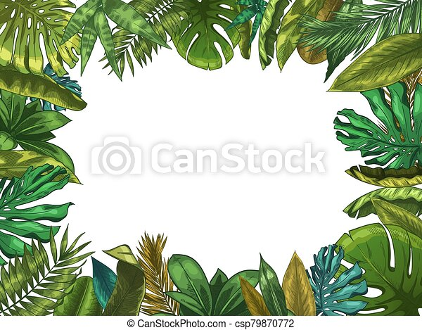 Green Tropical Leaves Frame Nature Leaf Border Summer Vacation And Jungle Plants Monstera And Exotic Palm Tree Leafs Canstock Tropical leaf palm print, showing various tropical plants together in one poster. https www canstockphoto com green tropical leaves frame nature leaf 79870772 html