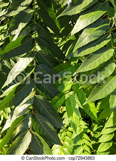 Green Tropical Leaves In Sunlight Background Closeup Nature View Of Green