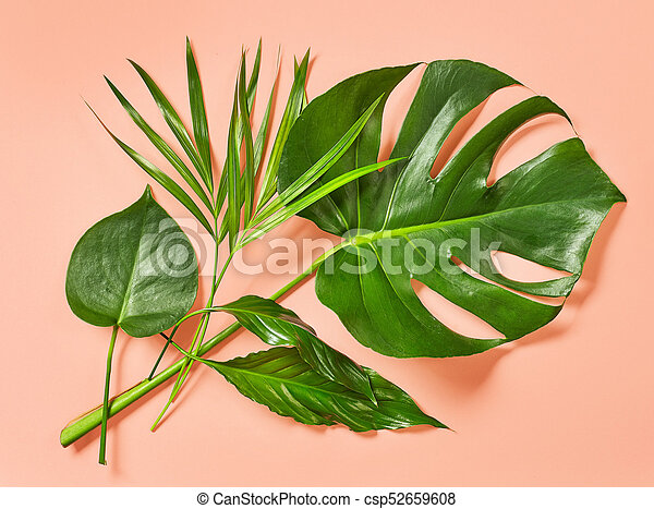 Green Tropical Leaves On Pink Background Canstock Green leaf on white sand during daytime. https www canstockphoto com green tropical leaves 52659608 html