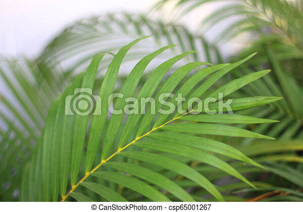 green tropical palm leaf with shadow on white wall - csp65001267