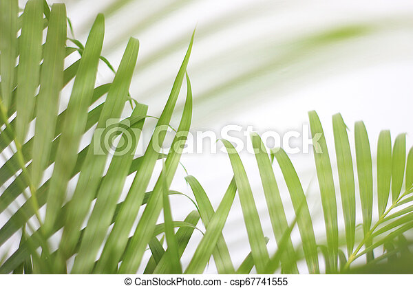green tropical palm leaf with shadow on white wall - csp67741555