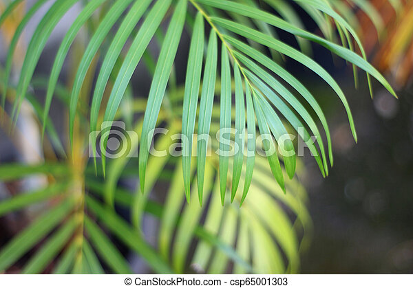 green tropical palm leaf with shadow on white wall - csp65001303