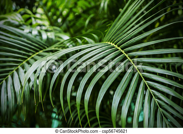Green Tropical Palm Leaves Background Canstock Download transparent tropical leaves png for free on pngkey.com. https www canstockphoto com green tropical palm leaves background 56745621 html