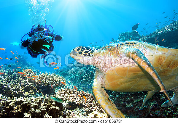 Green turtle underwater - csp1856731