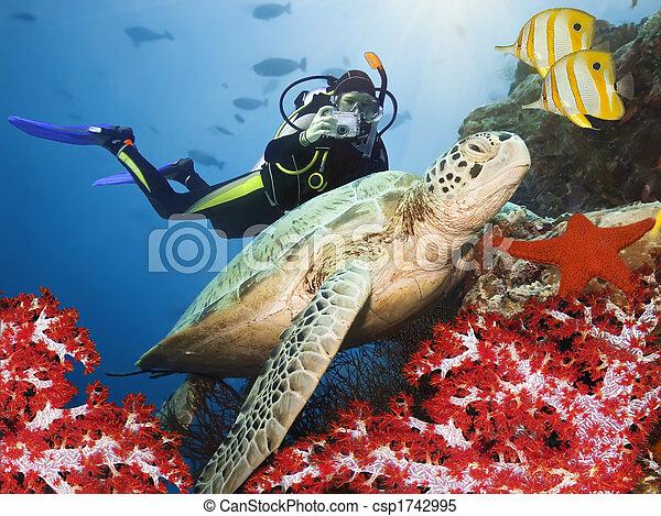 Green turtle underwater - csp1742995