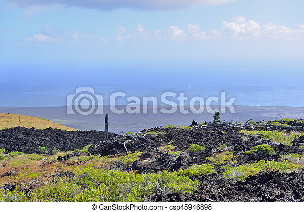 green vegetation on an old lava flow field by the ocean in Volcanoes National Park, Big Island of Hawaii - csp45946898