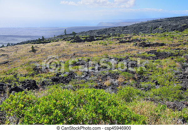 green vegetation on an old lava flow field by the ocean in Volcanoes National Park, Big Island of Hawaii - csp45946900
