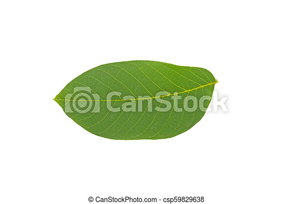 green walnut leaf isolated on white background - csp59829638