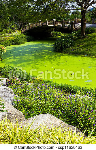 Green water in the park - csp11628463