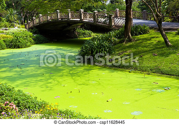 Green water in the park with bridge - csp11628445