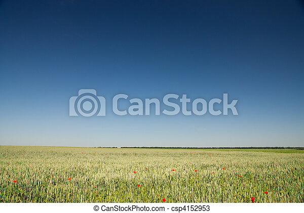 green wheat field and blue sky - csp4152953