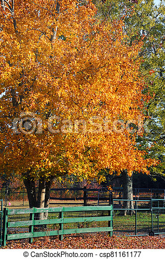 Green Wooden Fence and Autumn Glory - csp81161177