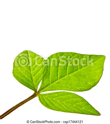 green young plant on white background - csp17444121