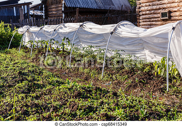 greenhouse for tomatoes and cucumbers - csp68415349