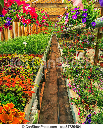 Greenhouse full of colorful flowers - csp84739404
