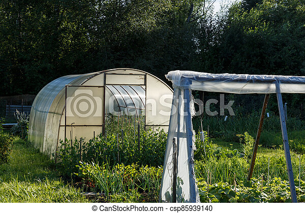 Greenhouse In The Kitchen Garden Vegetable Garden Next To The Forest Canstock