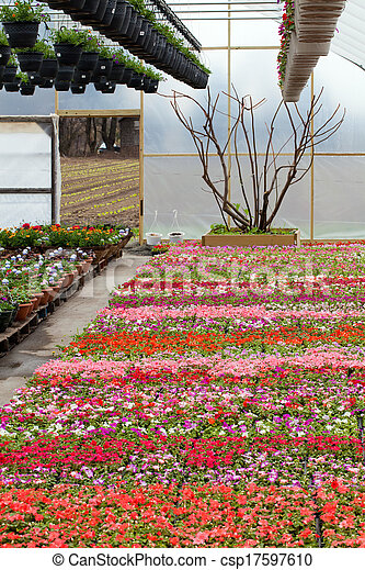 Greenhouse Nursery with Flowers - csp17597610