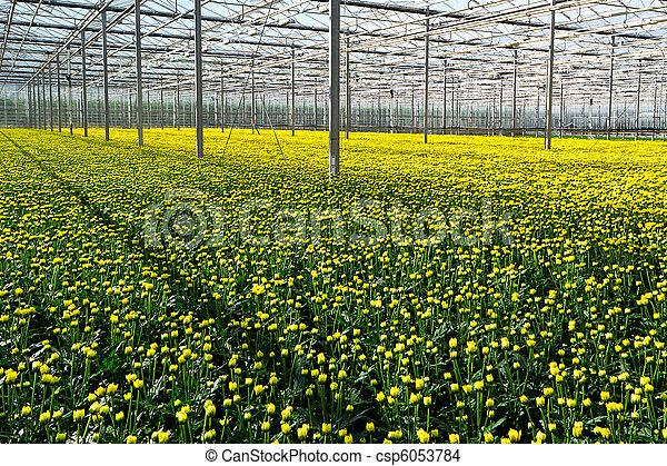 greenhouse - csp6053784
