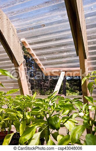 Greenhouse - csp43048006