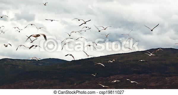 gregge, uccelli - csp19811027