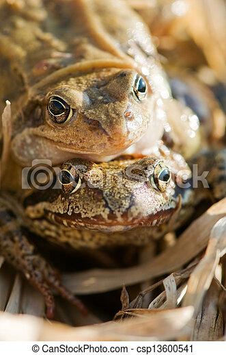 grenouille - csp13600541