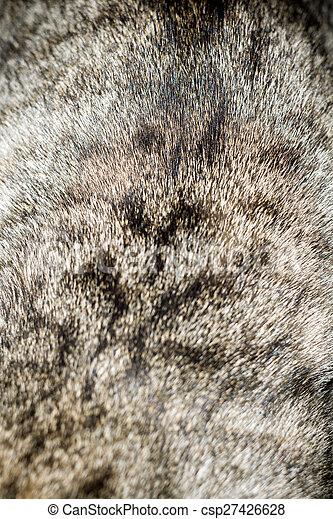 Grey Cat Fur - csp27426628