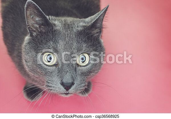 grey cat sitting on pink background - csp36568925