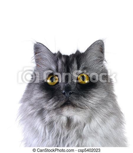 grey cat - csp5402023