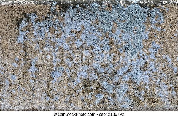 Grey Fungus On The Wall - csp42136792