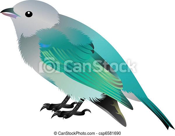 grey headed blue bird - csp6581690