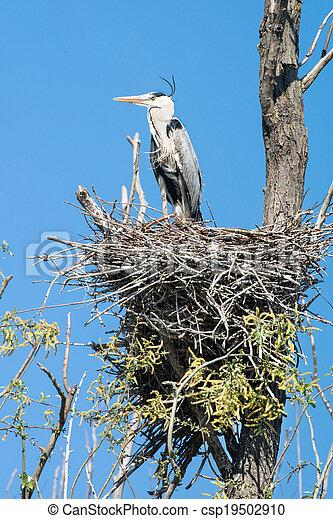 grey heron (Ardea cinerea) - csp19502910