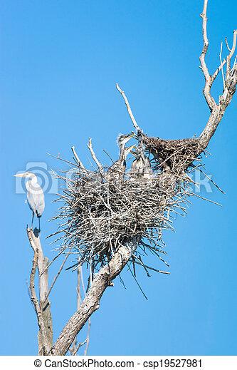 grey heron (Ardea cinerea) - csp19527981