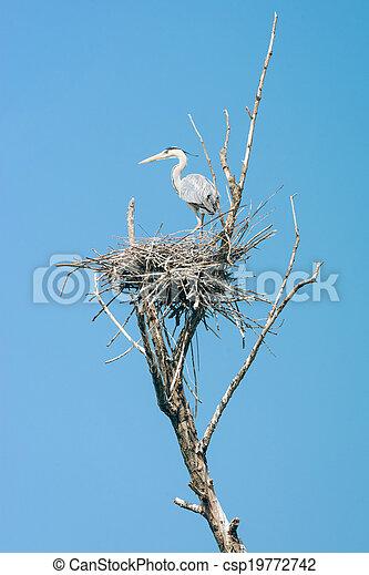 grey heron (Ardea cinerea) - csp19772742