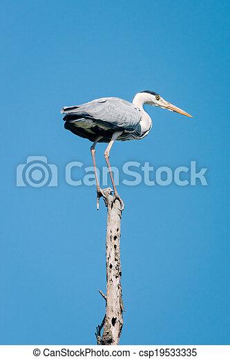 grey heron (Ardea cinerea) - csp19533335
