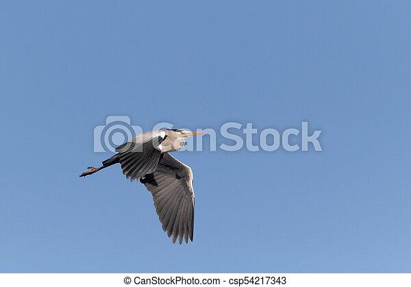 Grey Heron Ukraine 2018 - csp54217343